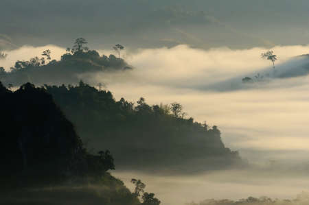 blue mountains tree frog: View light morning mist mountain in Phayao thailand  Stock Photo