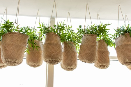 Green plants in wicker baskets hanging in front of big window, shop front