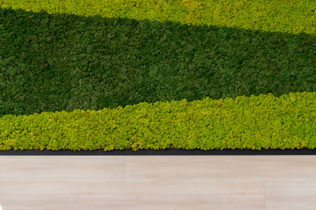 Layout of two green colors artifical moss or grass and light wooden wall