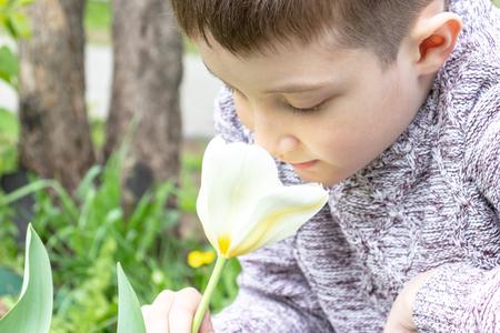 A preteen caucasian boy smelling white tulip flower in the spring garden. Фото со стока
