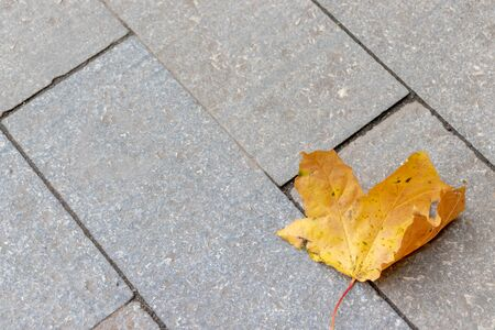 Lonely autumn dry yellow leaf lyind on a paved road with copy space. Foto de archivo