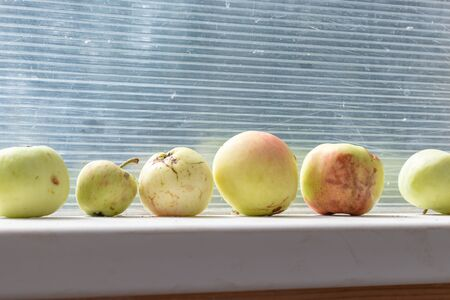 Yellow fallen dropped damaged apples lying in a row on a window sill on sunny autumn day, harvesting concept. Stok Fotoğraf