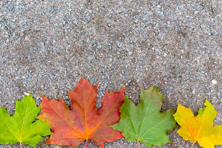 Colorful autumn fall maple leaves on the ground with copy space.