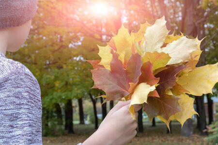 A teenager boy holding colorful maple leaves in hand in sunny autumn park during indian summer.