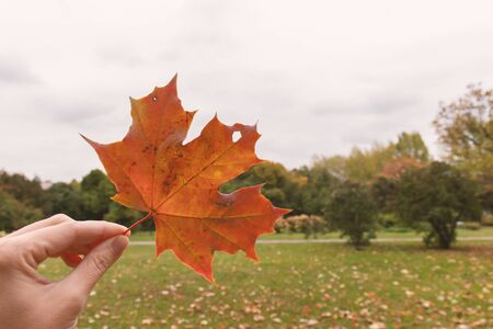A hand holding autumn brown maple leaf on a gloomy sad park background, melancholy and depression concept, copy space.