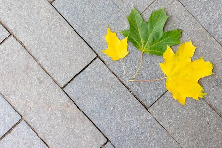 Colorful autumn fall maple leaves on the pavement with copy space. Stok Fotoğraf
