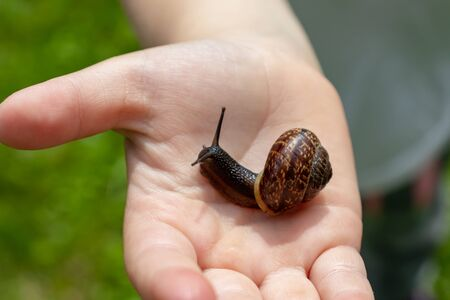 A child holding an edible snail Fructicicola fruticum close up in hand, sunny day in summer time. Reklamní fotografie