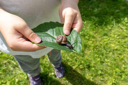 A child holding an edible snail Fructicicola fruticum on green leaf, summer time. Reklamní fotografie