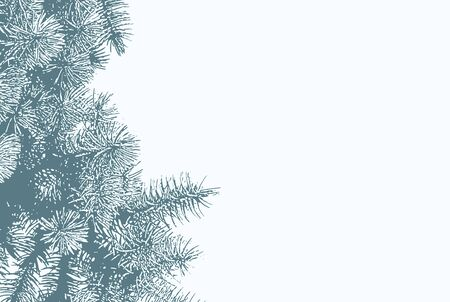 Fir tree branches on blue sky background with copy space.