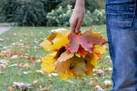 A teenager boy standing in city park and holding a bouquette of colorful yellow autumn maple leaves. Reklamní fotografie - 137125024