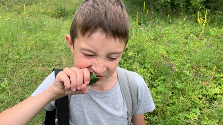 A portrait of a hungry preteen boy walking through a green field, meadow and eating a tasty raw cucumber on the go in summer, carefree boy hiking Banco de Imagens