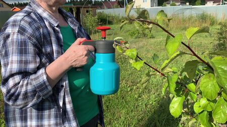Woman gardener spraying fruit trees and bushes against plant diseases and pests using spray bottle withinsecticide solution in the garden.
