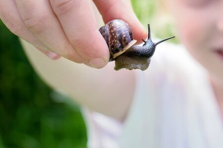 A blurred smiling unrecognizable girl holding an edible snail Fructicicola fruticum in hand, summer time.