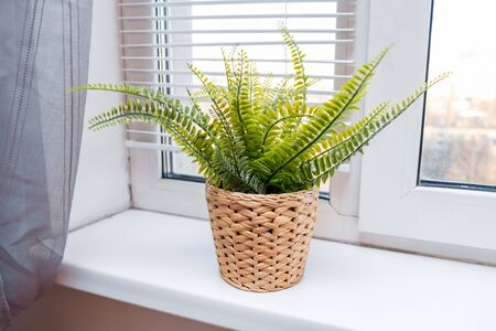 Green potted plant in wickered pot on a window sill in a modern home, spring sunny day outside the window. Reklamní fotografie
