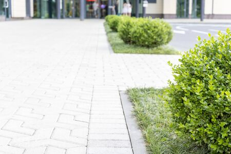 Modern minimalistic landscape, gardening design of a business centre with evergreen plants, background with copy space. Reklamní fotografie - 140558035
