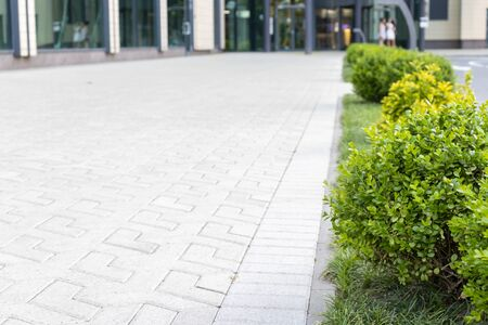 Modern minimalistic landscape, gardening design of a business centre with evergreen plants, background with copy space. Reklamní fotografie