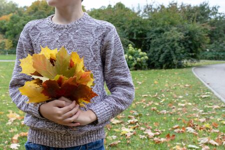 A teenager boy standing in city park and holding a bouquette of colorful yellow autumn maple leaves with copy space. Stock Photo