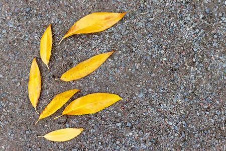 Yellow autumn leaves lying on a gravel background, the form of leaves like they are flying blown away by the wind, copy space Banque d'images