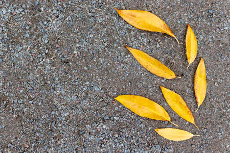 Yellow autumn leaves lying on a gravel background, the form of leaves like they are flying blown away by the wind, copy space