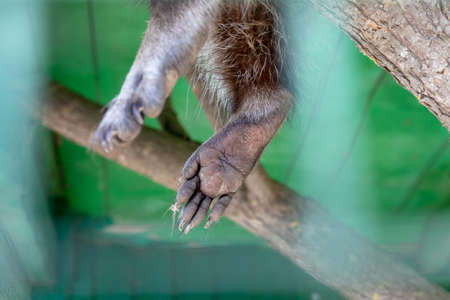 Paws of an animal locked in a cage behind a metal fence and wants to go home, rescue of wild animals in captivity. Stock Photo