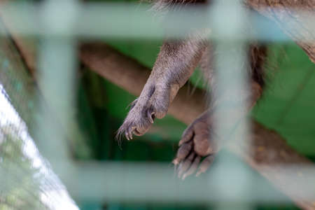 Paws of an animal locked in a cage behind a metal fence and wants to go home, rescue of wild animals in captivity.