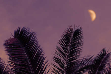 Palm leaves silhouettes with moon on violet background, exotic abstract tropical night, travel and adventure concept