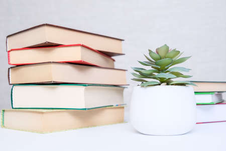 Stacked modern hardback books on a white table with green potted plant as a concept of reading and education Imagens