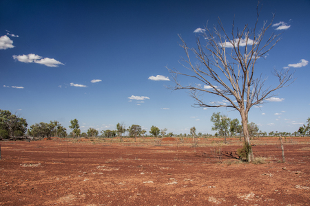Red Dirt and Dead Tree in Remote Outback