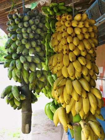 Bananas in bunches for sale Stock Photo