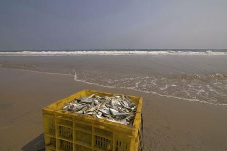 Fish Catch, Marina Beach, Chennai, Tamil Nadu