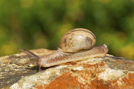 Crawling snail, Pune