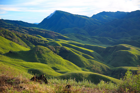 Dzükou Valley. Border of the states of Nagaland and Manipur, India 스톡 콘텐츠