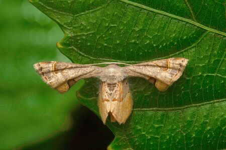 Moth , Aarey Milk Colony , INDIA Stock Photo