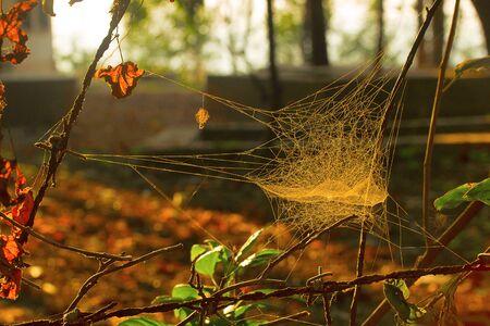 Spider nets , Aarey Milk Colony ,INDIA.