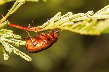 Bug, Bangalore, Karnataka. Stock Photo