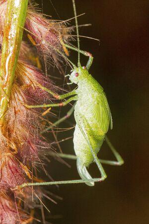 Grasshopper, Barnawapara WLS