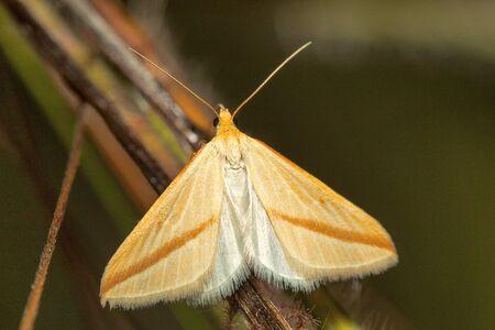Moth, Bangalore, Karnataka.