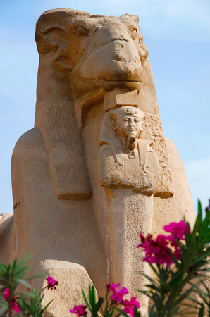 Close up view of the Sphinx of the god Amon Ra, Body of the lion and head of a sheep and King Nectanebu standing in front of the sphinx, To protect his own temple done by the King Nectanebu, Situated at entrance of Karnak Temple Complex, Comprises a vast mix of decayed temples, chapels, pylons and other buildings, Luxor, Egypt
