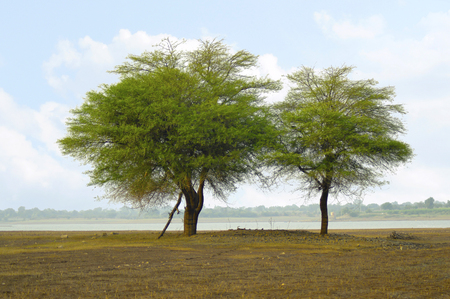 Two trees at the shore near Veer dam, Maharashtra, India Stock Photo