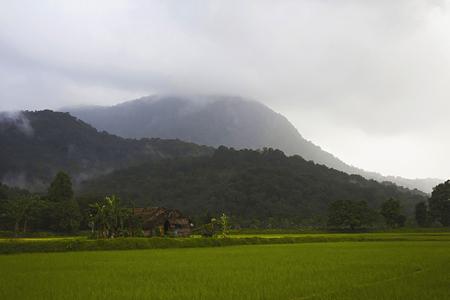 Green country at Sharavathi from Karnataka state of India