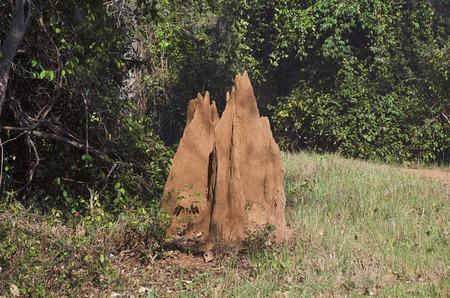 An ant hill, Nagzira Wild Life Sanctuary, Bhandara, Near Nagpura, Maharashtra India Stock Photo