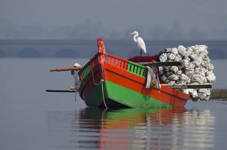 Great Egret, Ardea alba sitting on a fishing boat at Bhigwan, Pune, Maharashtra, India.