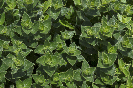 Top view of dark green leaves background