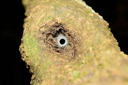 Funnel like web of spider at Amba in Kolhapur, Maharashtra, India 写真素材