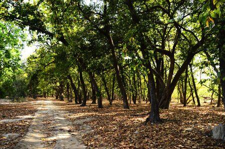 Tala zone forest at Bandhavgarh in Madhya Pradesh, India