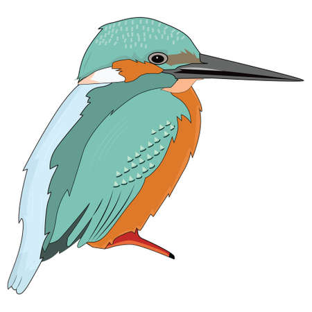 Small kingfisher