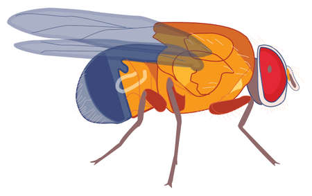 Colorful vector of a fly