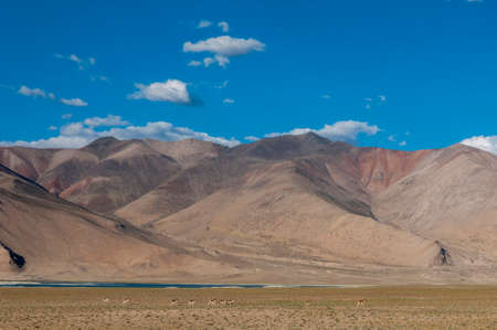 Red Mountains near Tsokar Lake, Ladakh, India,