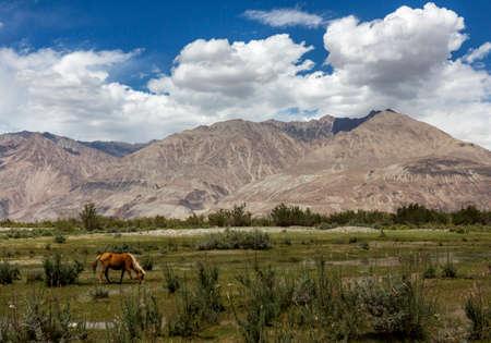 Sand Dunes of Nubra Valley, Ladakh, India