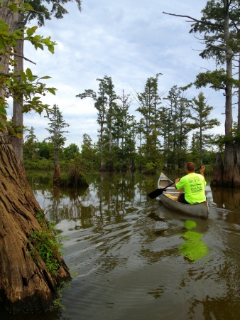 Canoeing through a swamp in Southern Illinois